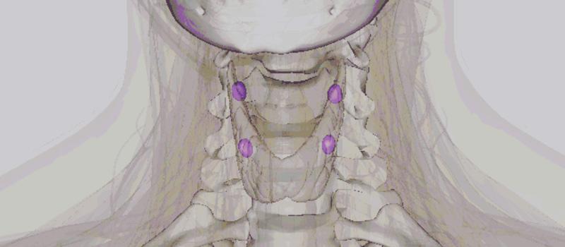Glándulas paratiroides ¿Qué son, qué función tienen y cómo enferman ...
