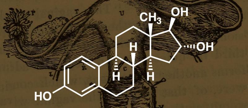 Qué son los estrógenos, función y qué hacer ante la falta de estrógenos